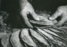 Υπάρχει ζωή για την αγροτική παραγωγή μετά την ΕΕ και το ευρώ;